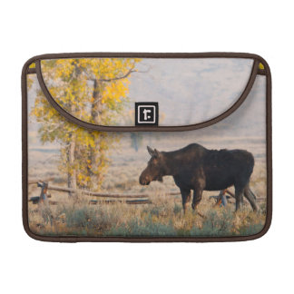 Moose (Alces Alces) Cow In Sage Brush Sleeve For MacBooks