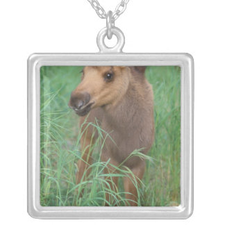 moose, Alces alces, newborn calf stands in 2 Silver Plated Necklace