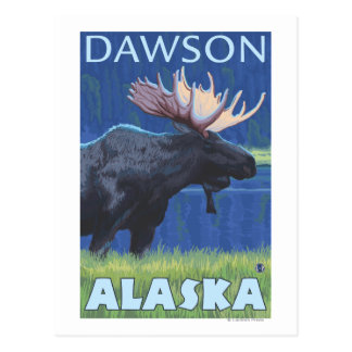 Moose at Night - Dawson, Alaska Postcard