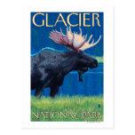Moose at Night - Glacier National Park, MT Postcards