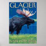 Moose at Night - Glacier National Park, MT Poster