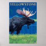Moose at Night - Yellowstone National Park
