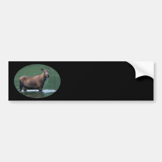 moose bumper sticker