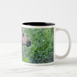 Moose calf in the Many Glacier Valley of Two-Tone Coffee Mug