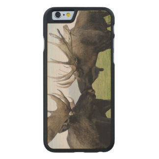 Moose Carved Maple iPhone 6 Case