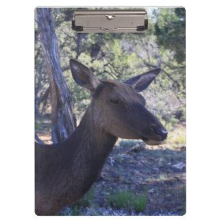 Moose Clipboard