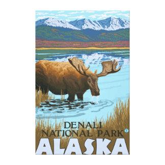 Moose Drinking at Lake - Denali National Park, Canvas Print