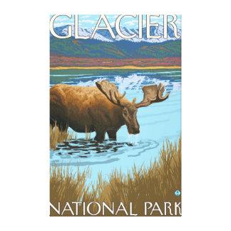 Moose Drinking at Lake - Glacier National Park, Canvas Print