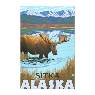 Moose Drinking at Lake - Sitka, Alaska Stretched Canvas Prints