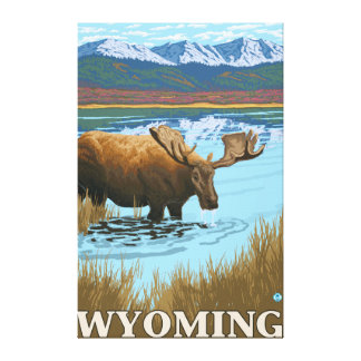 Moose Drinking at Lake - Wyoming Canvas Print