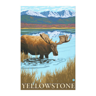 Moose Drinking at Lake - Yellowstone National Stretched Canvas Prints