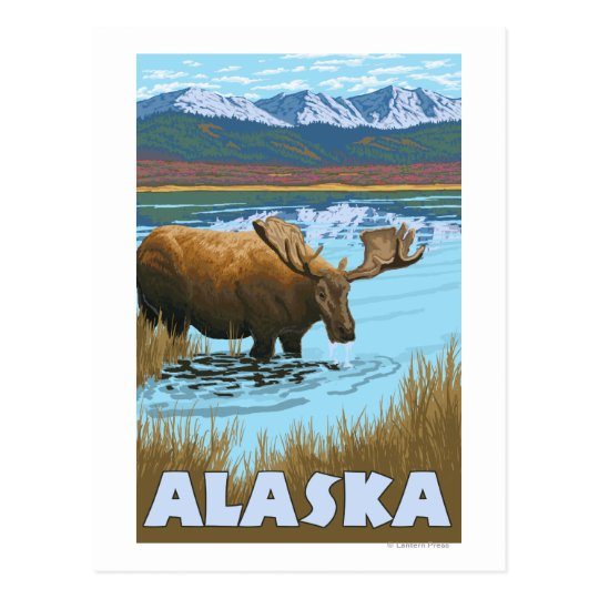 Moose Drinking Water Vintage Travel Poster Postcard
