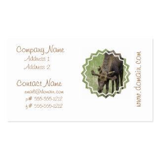 Moose Foraging Business Cards