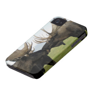 Moose iPhone 4 Case-Mate Case