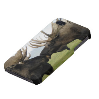 Moose iPhone 4 Cases