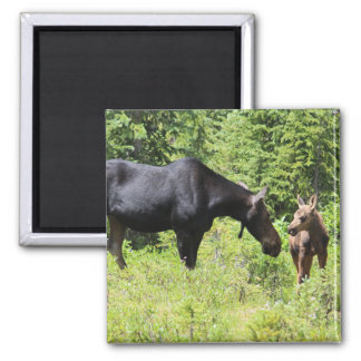 Moose Mum And Calf Magnet