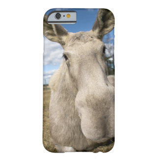 Moose on a field, Sweden. Barely There iPhone 6 Case