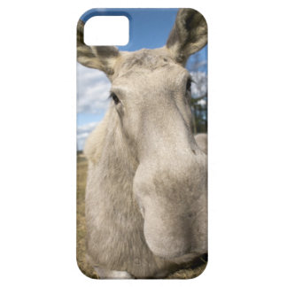 Moose on a field, Sweden. iPhone 5 Cases