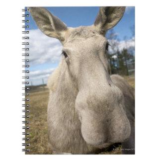 Moose on a field, Sweden. Notebook