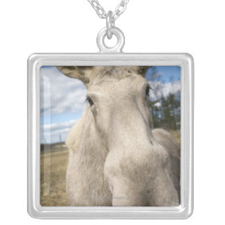 Moose on a field, Sweden. Silver Plated Necklace