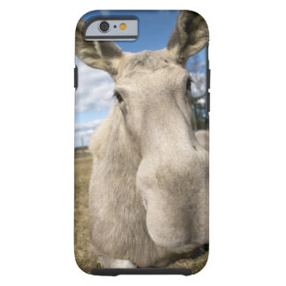 Moose on a field, Sweden. Tough iPhone 6 Case