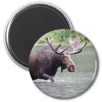 Moose on a Mission 6 Cm Round Magnet