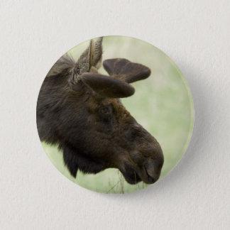 Moose Photo Round Button