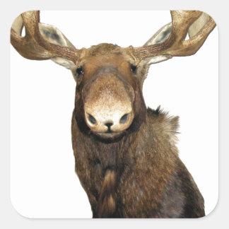 Moose Trophy Square Sticker