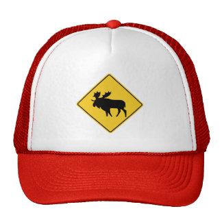 Moose Warning, Road Sign, Canada Cap