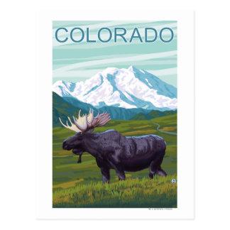 Moose with MountainColorado Postcard