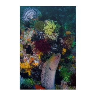Moray Eel and Coral Acrylic Wall Art