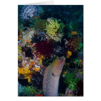 Moray Eel and Coral Card