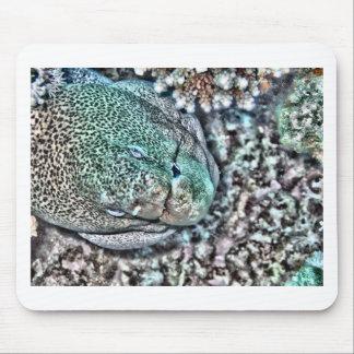 Moray Eel face Mouse Mat
