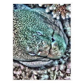 Moray Eel face Postcard