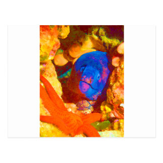 Moray Eel Postcard