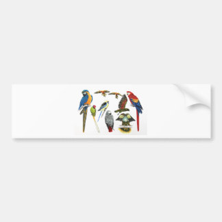 more and more Parrots for all your gifts Bumper Sticker