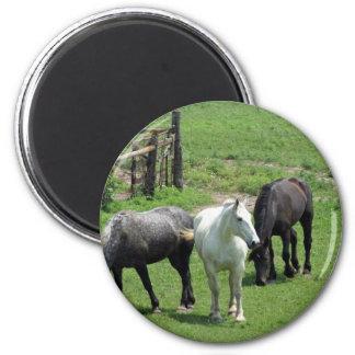 More Horses! 6 Cm Round Magnet