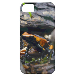 More Than An Autumn Leaf Phone Case iPhone 5 Cover