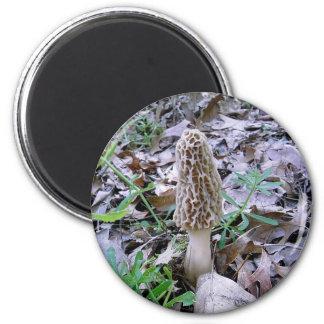 Morel mushroom magnet