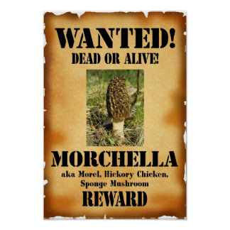 Morel - Wanted Dead or Alive Poster