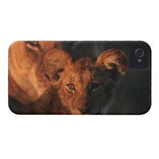 Moremi Wildlife Reserve, Botswana 2 Case-Mate iPhone 4 Case