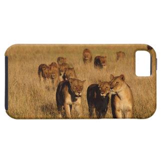 Moremi Wildlife Reserve, Botswana iPhone 5 Cover