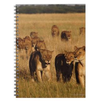 Moremi Wildlife Reserve, Botswana Notebook