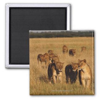 Moremi Wildlife Reserve, Botswana Square Magnet