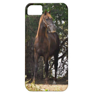 Morgan Horse iPhone 5 Case
