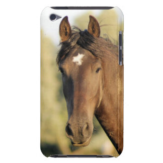 Morgan Horse iTouch Case iPod Touch Case