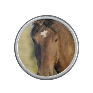 Morgan Horse Speaker