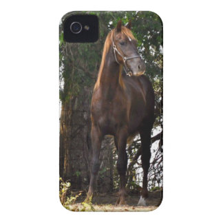 Morgan Horse Products!! iPhone 4 Covers