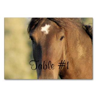 Morgan Horses Table Card