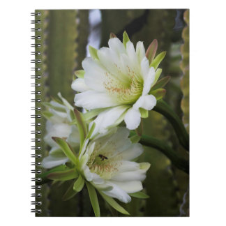Morning Cactus Bloom Notebook